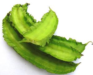 四角豆(シカクマメ)苗の生産販...